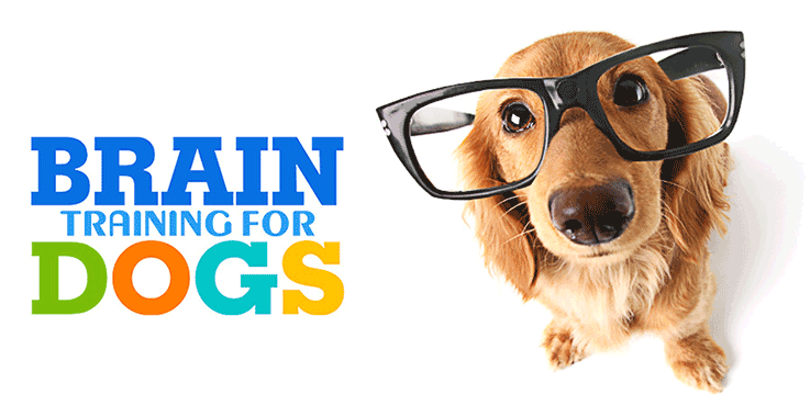 Brain Training For Dogs, Health Support Hub